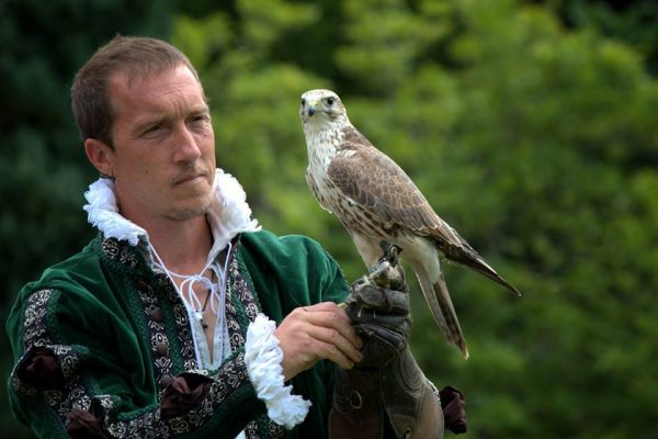 Falconry 1 600x400 - Family Days Out